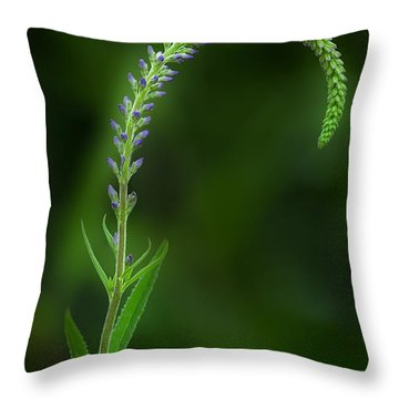 The Begining Throw Pillow by Bill Wakeley