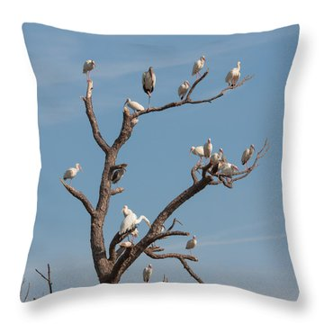 Throw Pillow featuring the photograph The Bird Tree by John M Bailey