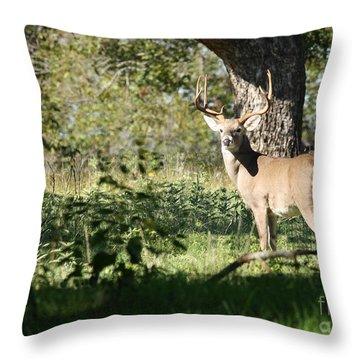 Missouri Whitetail Throw Pillows