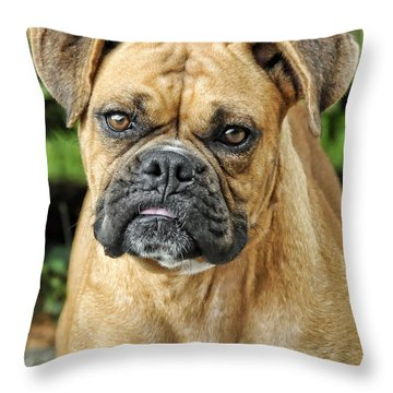 The Boxer Throw Pillow by Kenny Francis