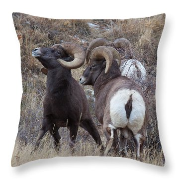 Throw Pillow featuring the photograph The Boys Club by Jim Garrison
