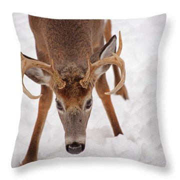 The Buck Stare Throw Pillow by Karol Livote
