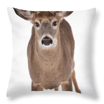 The Buck Stops Here Throw Pillow by Karol Livote