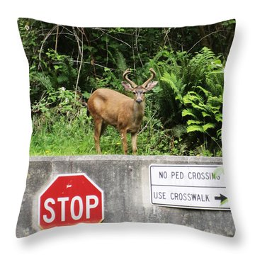 The Buck Stops Here Throw Pillow by Kym Backland