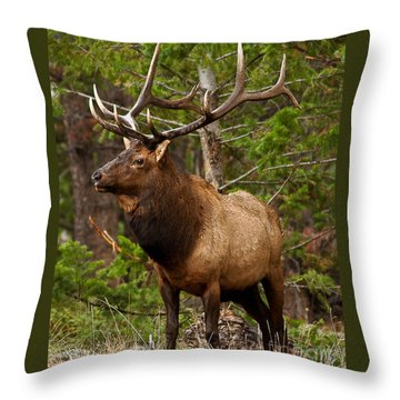 The Bull Elk Throw Pillow by Steven Reed