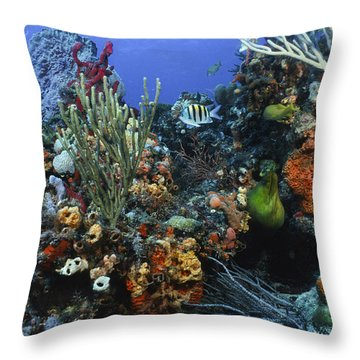 The Busy Reef Throw Pillow