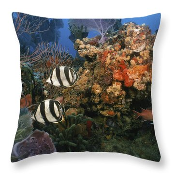 The Butterflyfish On Reef Throw Pillow