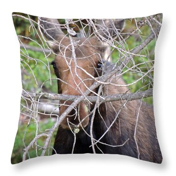 Throw Pillow featuring the photograph The Calf by Lynn Sprowl