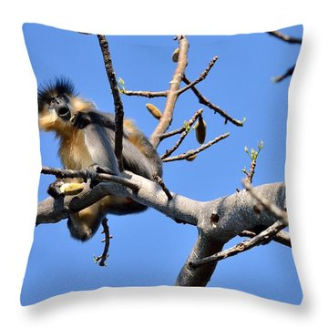 The Capped One Throw Pillow by Fotosas Photography