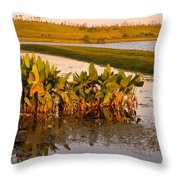 The Celery Fields In Sarasota Throw Pillow