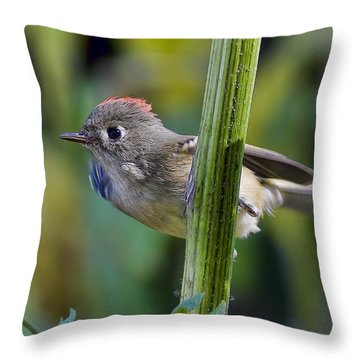 Throw Pillow featuring the photograph The Challenge by Gary Holmes