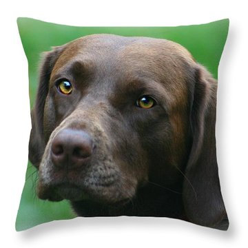 The Chocolate Lab Throw Pillow