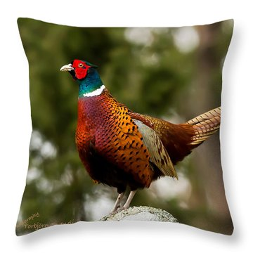 The Cock On Top Of The Rock Throw Pillow by Torbjorn Swenelius