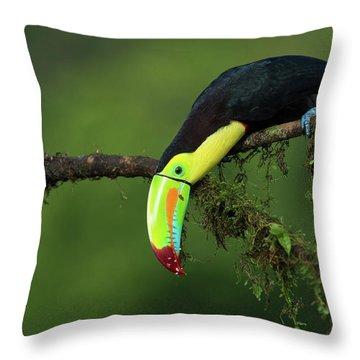 Costa Rica Throw Pillows