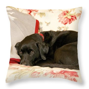 Throw Pillow featuring the photograph I Don't Want To Get Off This Sofa by Colleen Williams