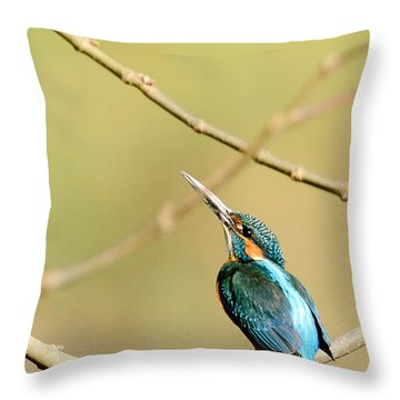 The Common Kingfisher Throw Pillow by Fotosas Photography