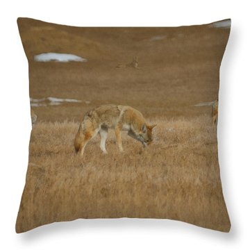 The Coyotes Painterly Throw Pillow by Ernie Echols