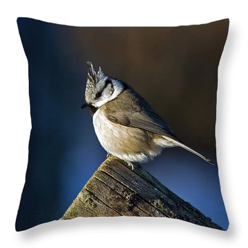 The Crested Tit In The Sun Throw Pillow