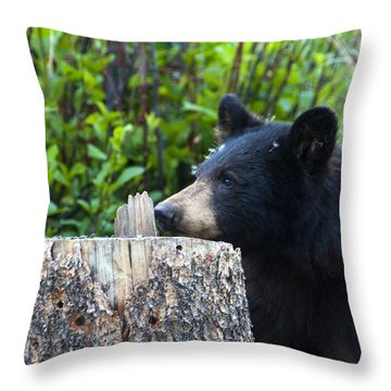 The Cub That Came For Lunch 1 Throw Pillow