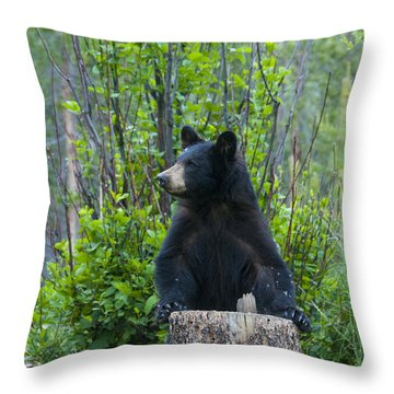 The Cub That Came For Lunch 3 Throw Pillow
