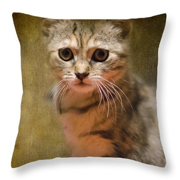 The Cutest Kitty Throw Pillow