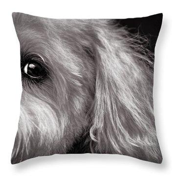 The Dog Next Door Throw Pillow