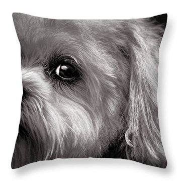 The Dog Next Door Throw Pillow