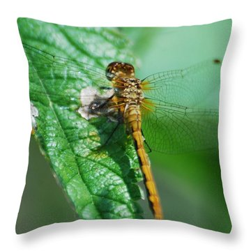 Throw Pillow featuring the photograph The Dragonfly by Ramona Whiteaker