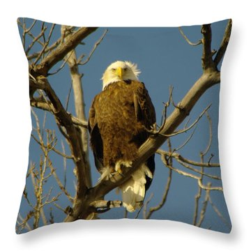 The Eagle Looks Down Throw Pillow by Jeff Swan