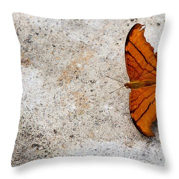 The Elusive Butterfly  Throw Pillow by Rene Triay Photography