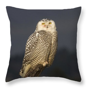 The Eyes Are It Throw Pillow