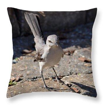 The Fiesty Catbird Throw Pillow by Maria Urso