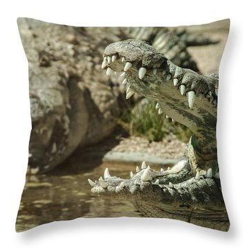 Throw Pillow featuring the photograph The Fool Crocodile by Stwayne Keubrick
