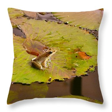 Throw Pillow featuring the photograph The Frog by Evelyn Tambour