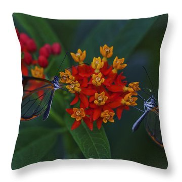 The Glasswinged Butterfly Throw Pillow by Maj Seda