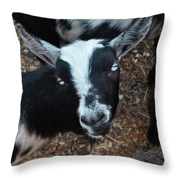 Throw Pillow featuring the photograph The Goat With The Gorgeous Eyes by Verana Stark