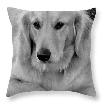 The Golden Retriever Throw Pillow by James C Thomas