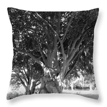 The Grandmother Tree Throw Pillow by Sarah Lamoureux