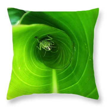 Throw Pillow featuring the pyrography The Grasshopper Flush by Rebecca Davis