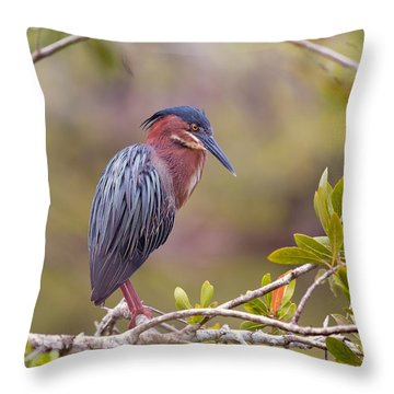 The Green Heron At Blue Hole Throw Pillow
