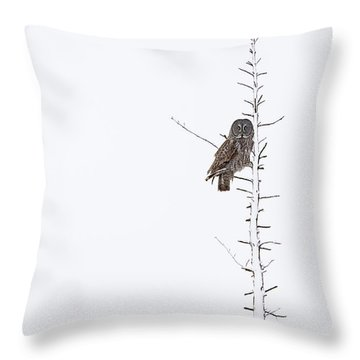 The Grey Hunter On White Throw Pillow