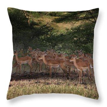 The Heram Throw Pillow by Joseph G Holland