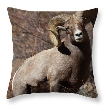 The High And Mighty Throw Pillow by Jim Garrison