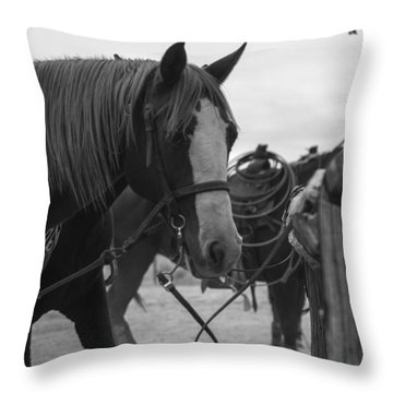 Throw Pillow featuring the photograph The Hitching Post by Amber Kresge