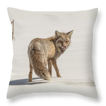 Throw Pillow featuring the photograph The Hungry Fox by Yeates Photography