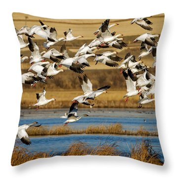 Throw Pillow featuring the photograph The Journey by Jack Bell