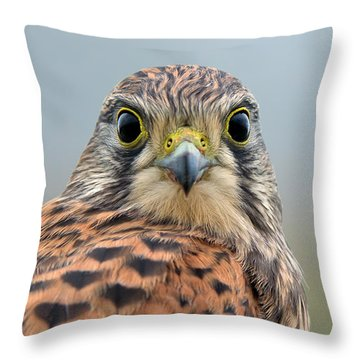 The Kestrel Face To Face Throw Pillow by Torbjorn Swenelius