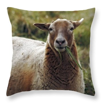Feed My Sheep Throw Pillow
