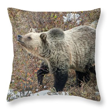 Throw Pillow featuring the photograph The Last Berry by Jack Bell