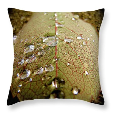 The Leaf After Rain Throw Pillow by CML Brown